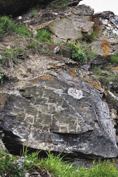 Изображения оленей встречаются на скалах Пегтымеля наиболее часто.